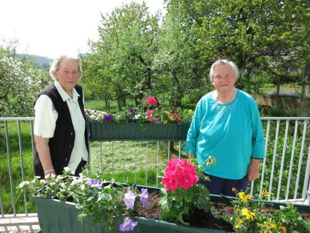 Blumen pflanzen für unsere Terrasse