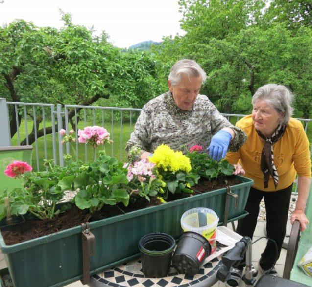 Unsere Balkonkisterl werden bepflanzt
